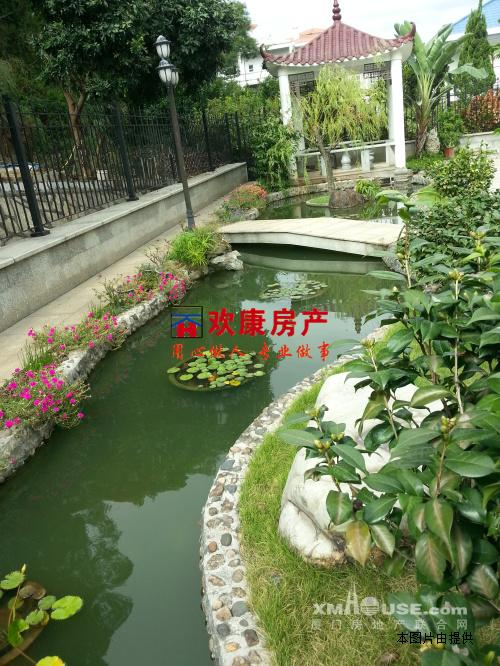 后院鱼池图片