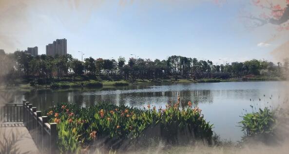 角美湿地公园 美不胜收的景致